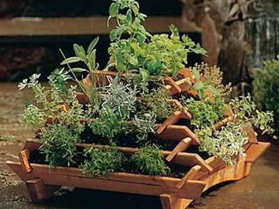 Idėja namams: prieskoninių augalų darželis