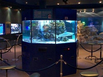 Jūrų muziejus dovanoja truputį pramogos