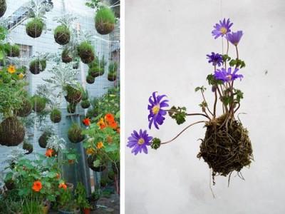 Idėja namams: kabantys sodai