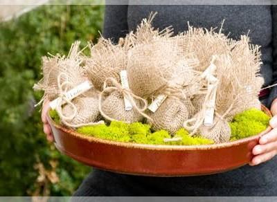 Dovanos idėja naujakuriams: svogūninės gėlės