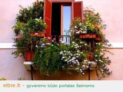 Norite būti stilinga – auginkite gėles balkone