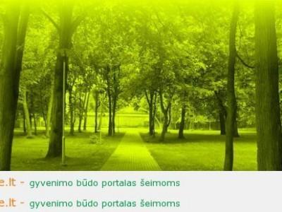 Vasaros koncertų ciklas Klaipėdos koncertų salėje