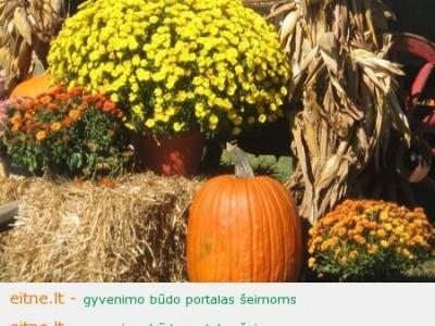 Kelios idėjos rudeniniam namų dekoravimui