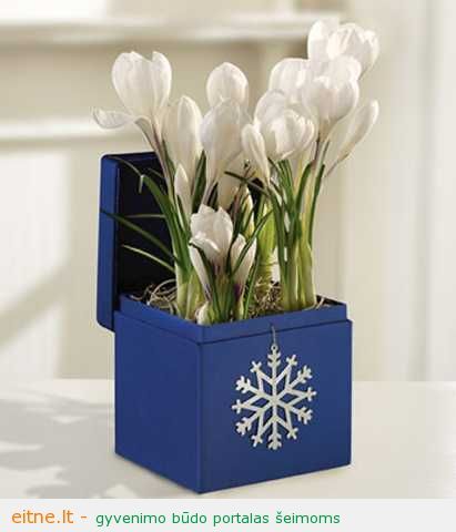 winter-decorating-with-flowers